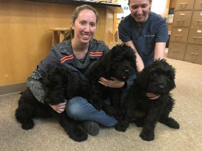 Team members with three black labradoodles